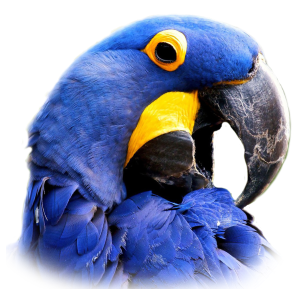 Blue Macaw Aka Hyacinth Macaw Macaw Facts,Beige Color Palette